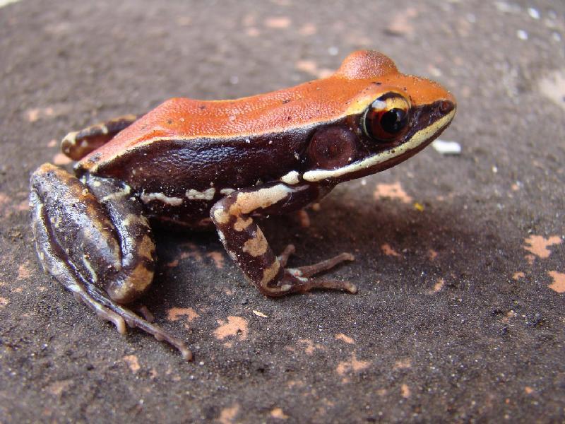 Name:  frog.jpg Views: 224 Size:  92.8 KB