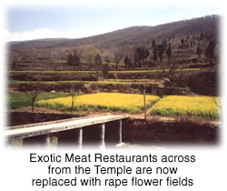 Exotic Meat Restaurants across from the Temple are now replaced with ripe flower
